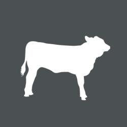 Icon Bio-Kalb