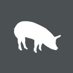 Grafik-Bio-Schwein