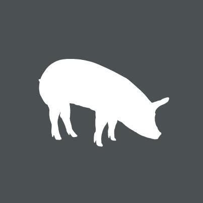 Icon Bio-Schwein