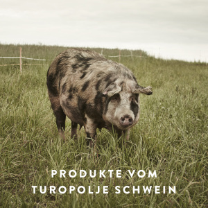 turopolje-schwein_main