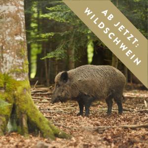 main-wildschwein-ab-jetzt