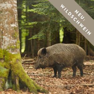 wildschwein-neu