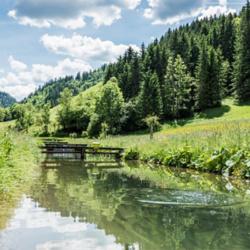 Fisch-Teich in Mariazell