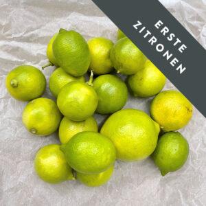 erste Zitronen Crupi