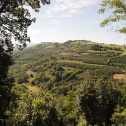 papa dei boschi – Azienda Agricola