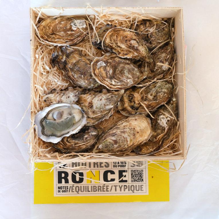 Ronce Austern Nr.3